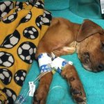 Sign / Share for Caleb #JusticeForCaleb #ASPCA #RIPcaleb #OpBeast https://t.co/rXeycgnbLO … https://t.co/A9eoVuPt8k