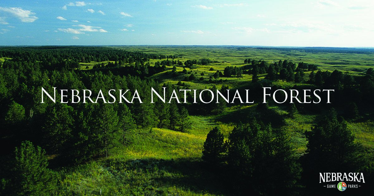 Did you know? The Nebraska National Forest is the largest hand-planted forest in the United States. https://t.co/qkcrD81t31