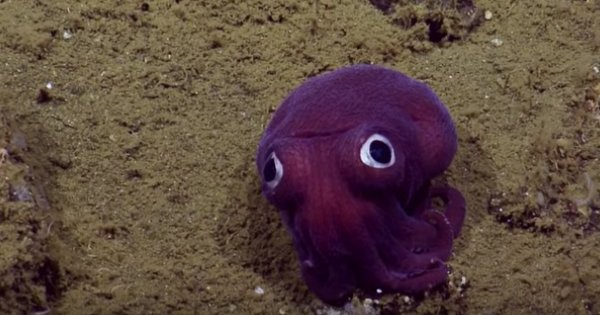 The Googly-Eyed Stubby Squid Is Proof That Not Everything That Lives in the Ocean Is Scary https://t.co/3JITakMq3z https://t.co/lc9vw5dXsU