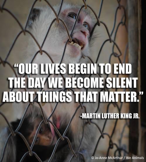 #NeverBeSilent https://t.co/6o2WjXt97R