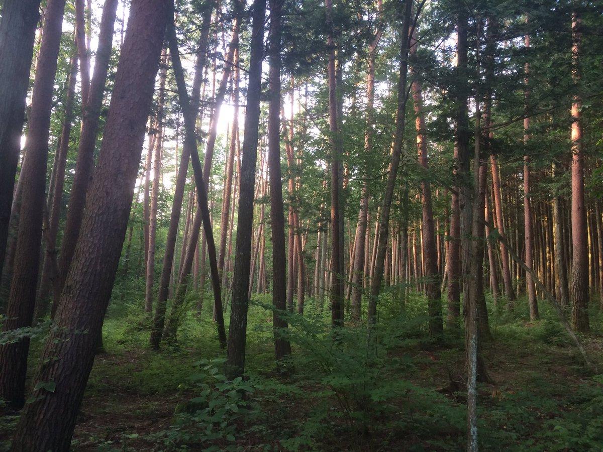 散歩へ。長野の朝は早い。(吉川)