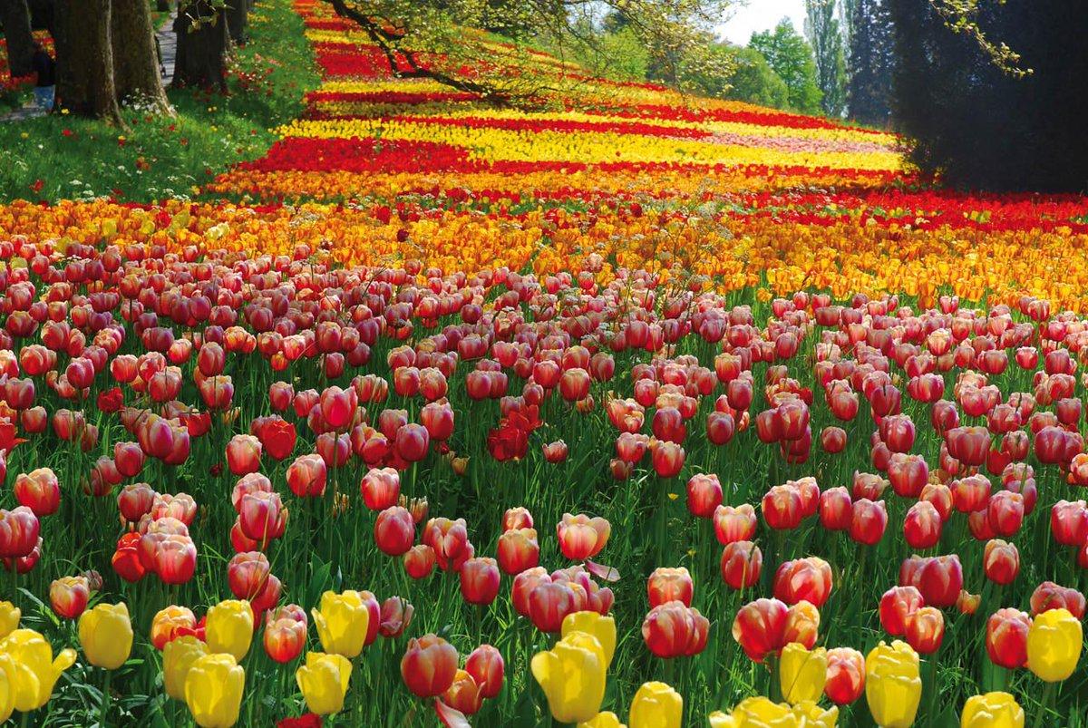 Озеро из цветов