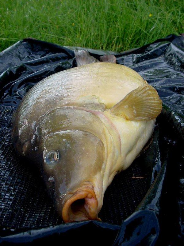 Quelques heures de pêche et boum ! #speedfishing #<b>Chodrig</b> #ccmoore  #carpfishing #carp #fish