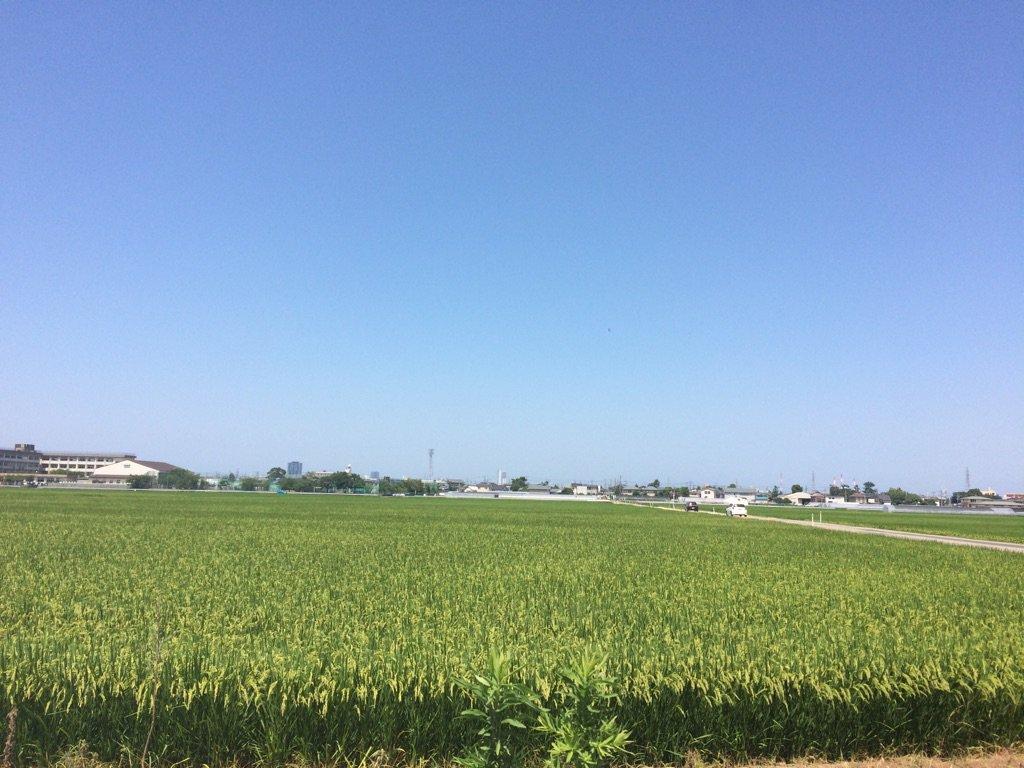完全なる日本の魂コシヒカリがこんなに!!!  新潟、名残惜しいけどまた来るよー!!!  天気は真夏の…