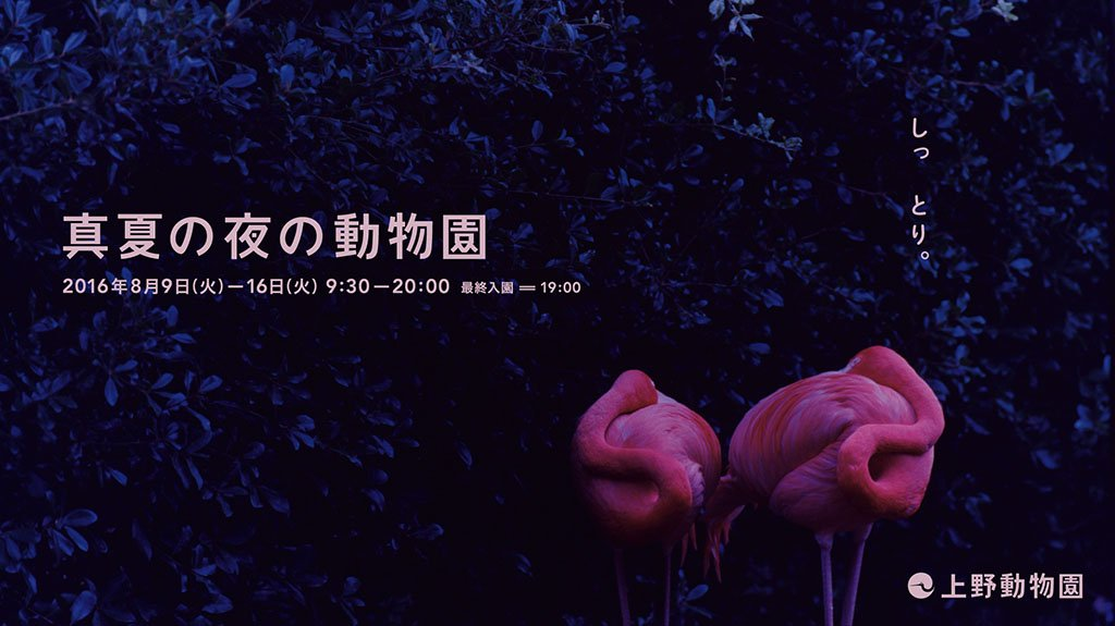いよいよ秒読み、真夏の夜の動物園。 フラっと、きてミンゴ。