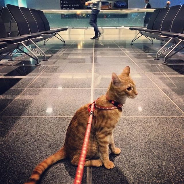 Travel, it's meow or never. Tell us about your dream vacation! Photo by: