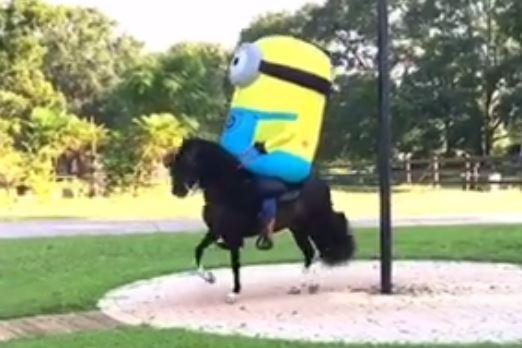 VIDEO MS man sports minion costume while riding horse» //t & Video: ms man sports minion costume while riding horse» - scoopnest.com