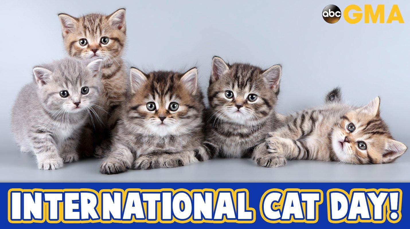 Happy #InternationalCatDay! �� https://t.co/v0fKw0UQXE