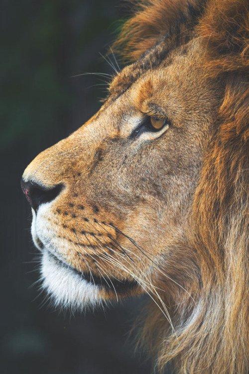 KING JAMES HRMH | When you see a wild animal, do you assume... https://t.co/sgoJPzx6Vp | https://t.co/VFc0rXPlfn https://t.co/dalC3SB8V6