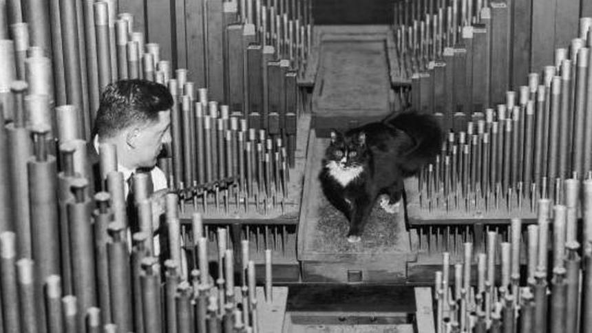 Albert the royal albert hall 39 s organ cat wishes you a for Door 8 albert hall