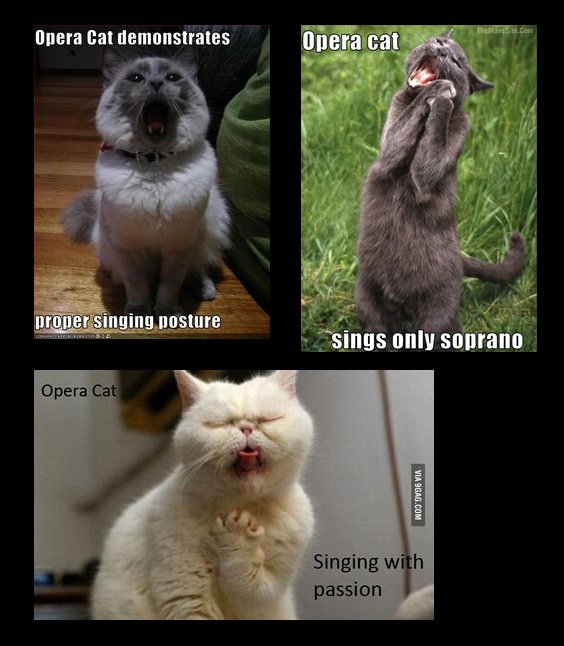 Happy #InternationalCatDay! Here's some talented felines demonstrating great singing posture and passion #OperaCat https://t.co/PCIJaFNhAq