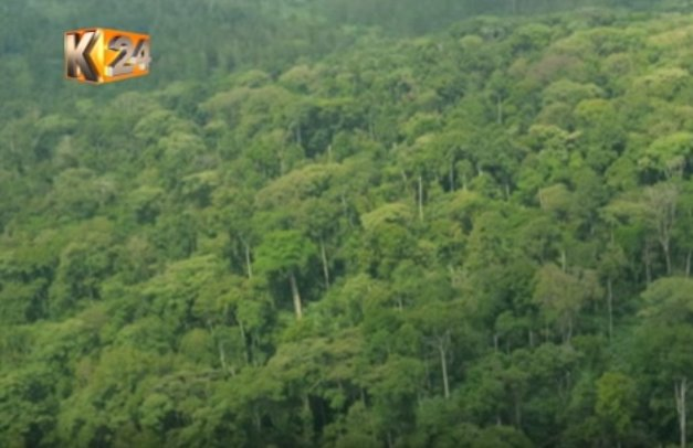 Concerns raised as cases of encroachment, wide-spread logging rise in the Kakamega forest