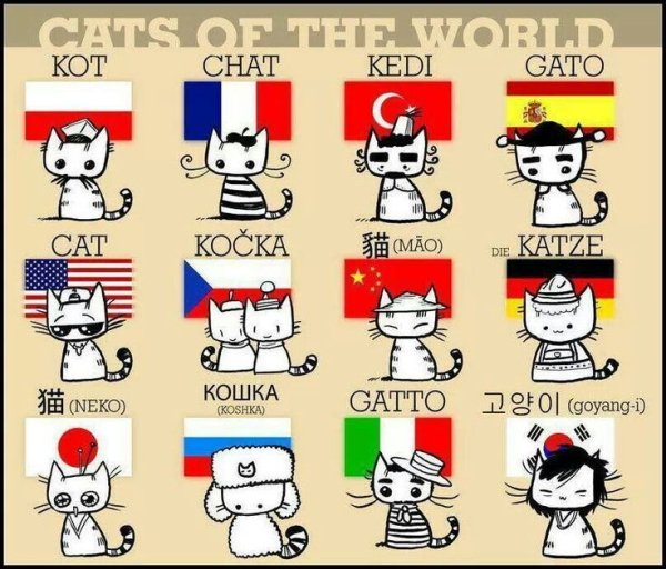 Happy #InternationalCatDay! Adorable cats in different languages: https://t.co/VJYTaT3yCD