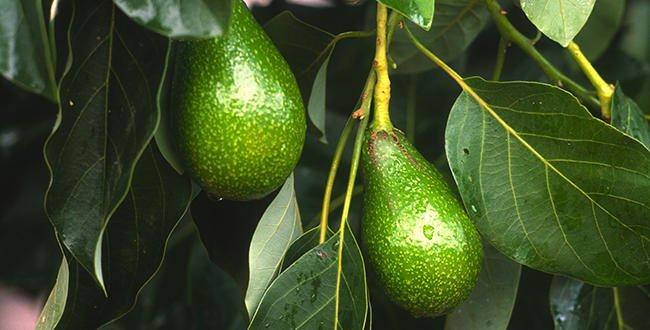 8 avocado hacks every guac lover needs to know: