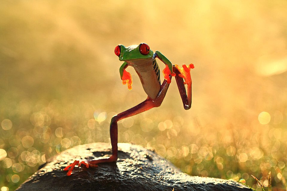 Let`S Dance Frog | Photography by ©Shikhei Goh https://t.co/YSfEAvFtBz