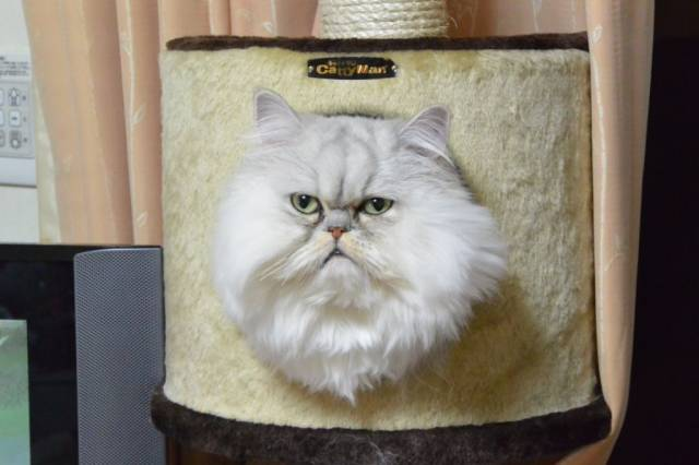 真実の口 https://t.co/UgOFdndjAC #cat #猫 #写真 #おすぎちゃんさん https://t.co/3PZVp7KmEQ