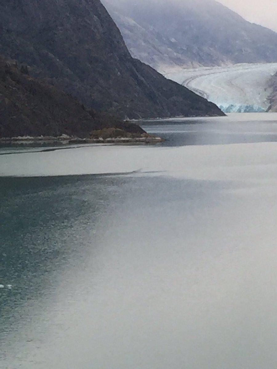 View of the #TracyFjordGlacier at 5am this morning @PrincessCruises #rubyprincess #Alaska2016 #willtravelforfood https://t.co/LJuXzqNciF