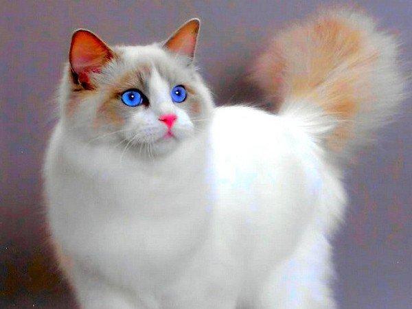 самый красивый в мире котенок фото