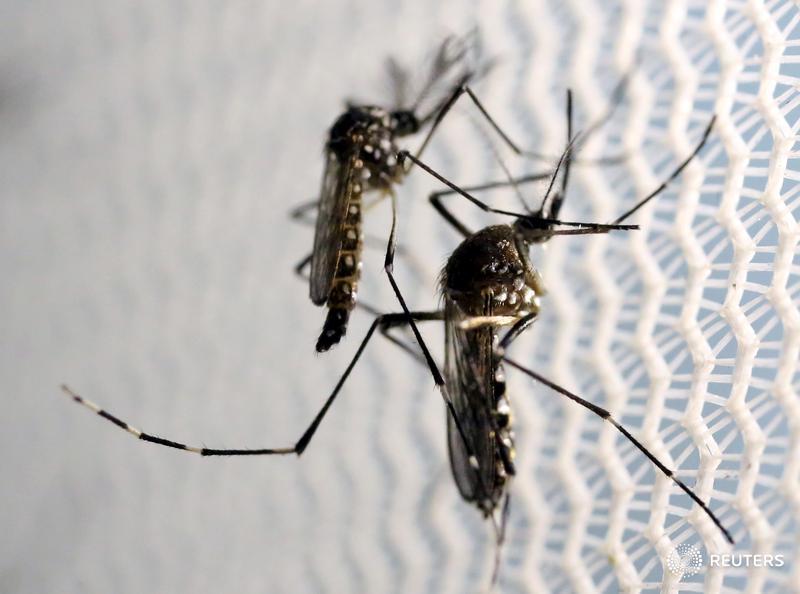Timeline: Zika's origin and global spread -