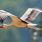 Erste Zugvögel sind in den Süden geflogen