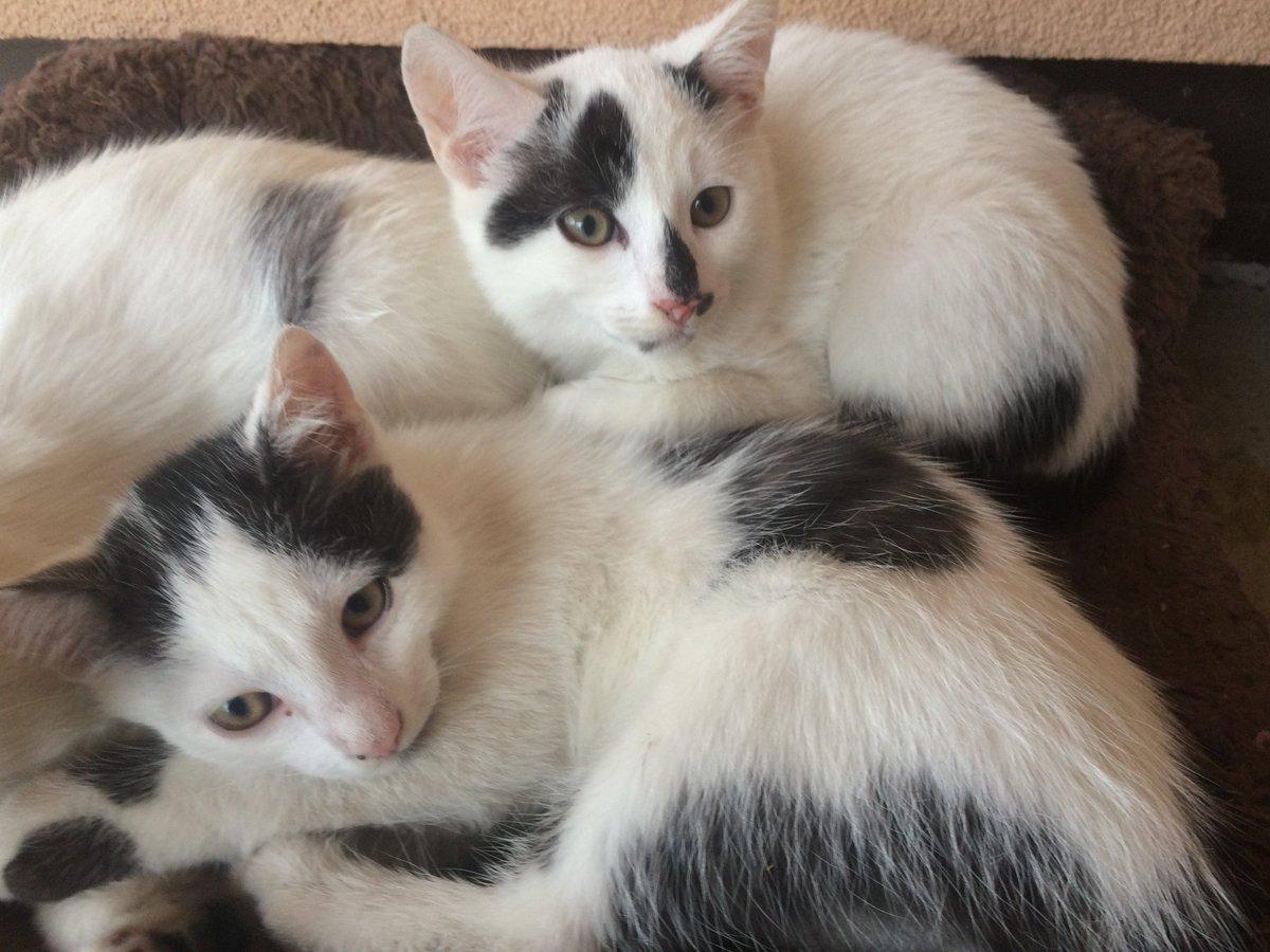 Oddam w dobre ręce koty. Pomóż znaleźć im dom. Przekaż dalej  #RT https://t.co/mJ8AcPwH15