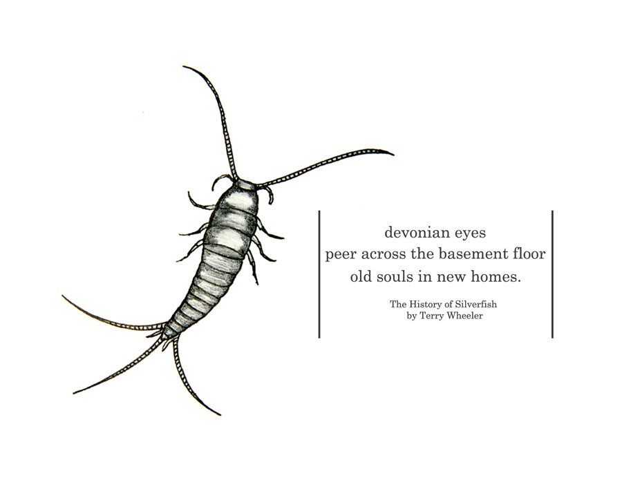 A little art and poetry for your Thursday #ScienceandArt. Sketch by #TheBugChicks https://t.co/gyZ2fCP7yR
