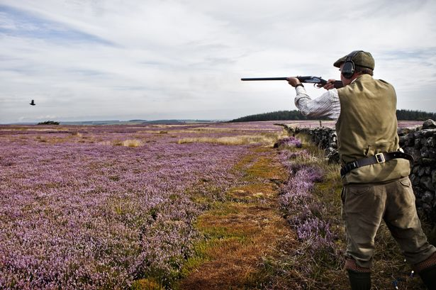 """GR8 article from @ChrisGPackham. all u need to know about the real cost of grouse shooting https://t.co/75AGkhclMi https://t.co/TB7wue9mbP"""""""