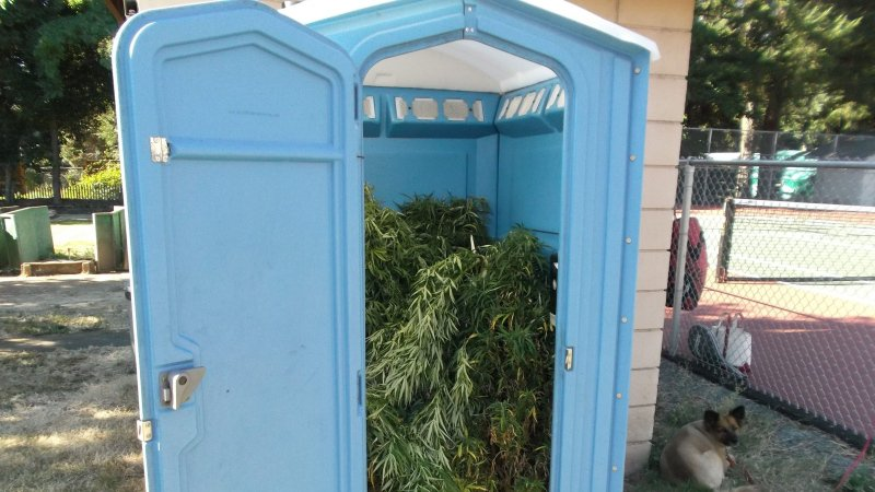 Porta-pot? Oregon toilet found filled with marijuana, police say it's their largest haul