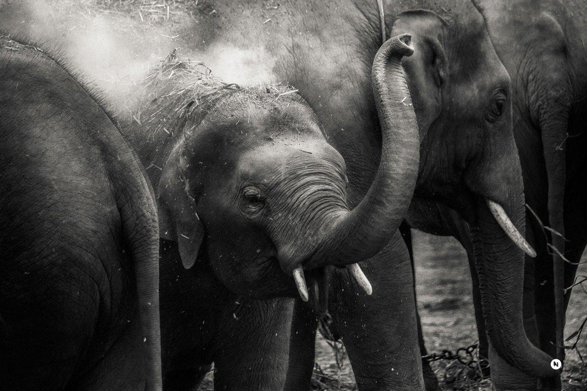 Wundervoll majestätische Tiere - wir hoffen, sie bleiben dieser Erde noch ganz lange erhalten! #WorldElephantDay https://t.co/Y5VZduckcX