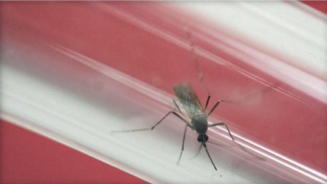 U.S. territory of Puerto Rico reported 1,914 new Zika cases over the past week