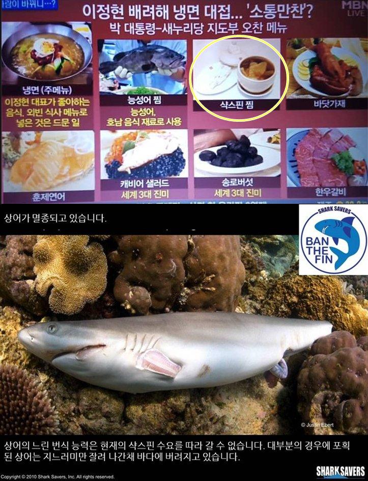 박대통령이 이정현 대표에게 대접한 샥스핀 요리는 지느러미 수집과정에서 해마다 수백만마리의 상어가 잔인하게 죽어가기 때문에 국제적으로 공식만찬 등에서 금기시 하고 있음. 그만큼 청와대가 생각이 없다는 의미. https://t.co/fIcEpg9ViH