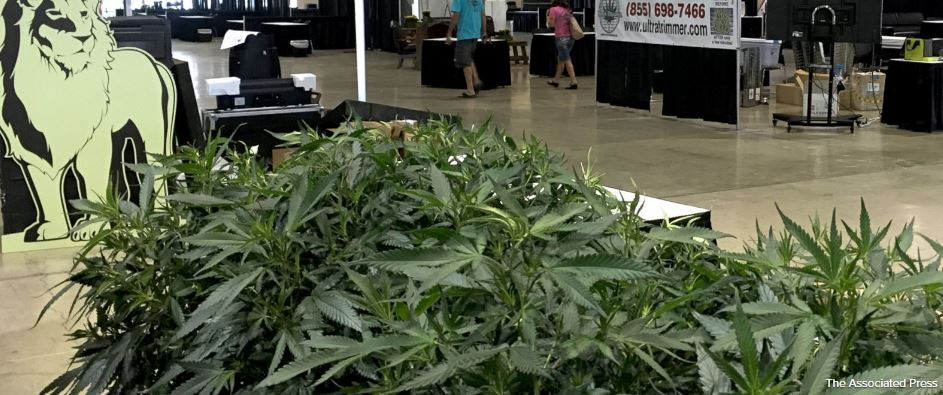 Inaugural cannabis fair being set up in Oregon