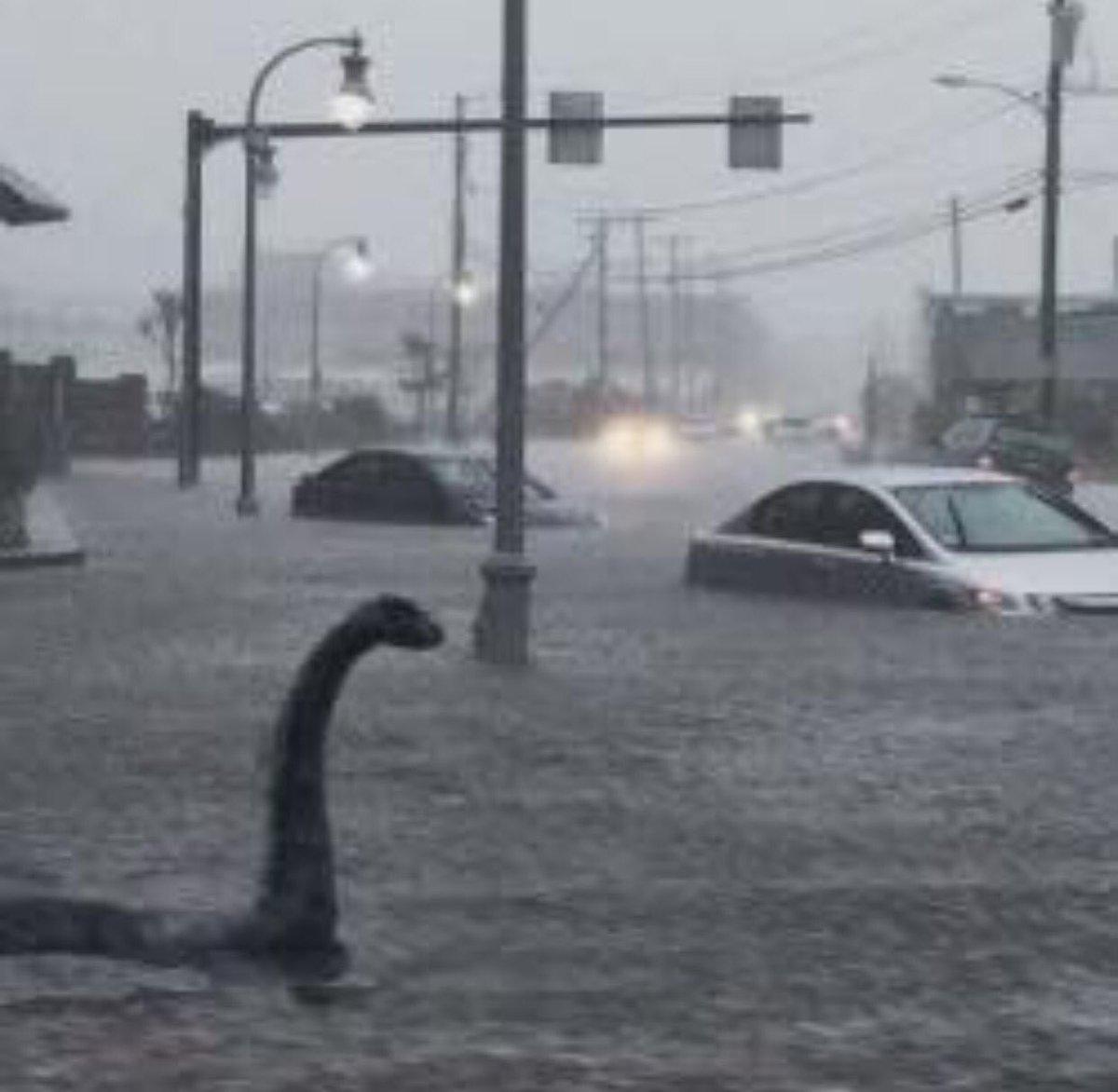 Nessy!!!!!!   #laflood https://t.co/KVdadoshqe