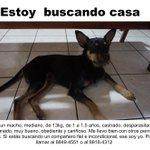 El dueño del perrito apareció pero no lo quiere de vuelta 💔 Le estamos buscando casa. Por favor su ayuda difundiendo https://t.co/qwfT9zWag8