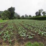 La agricultura y el turismo, claves para el desarrollo, Paso Ancho, Cerro Punta, Chiriquí https://t.co/62EB0b5dtn