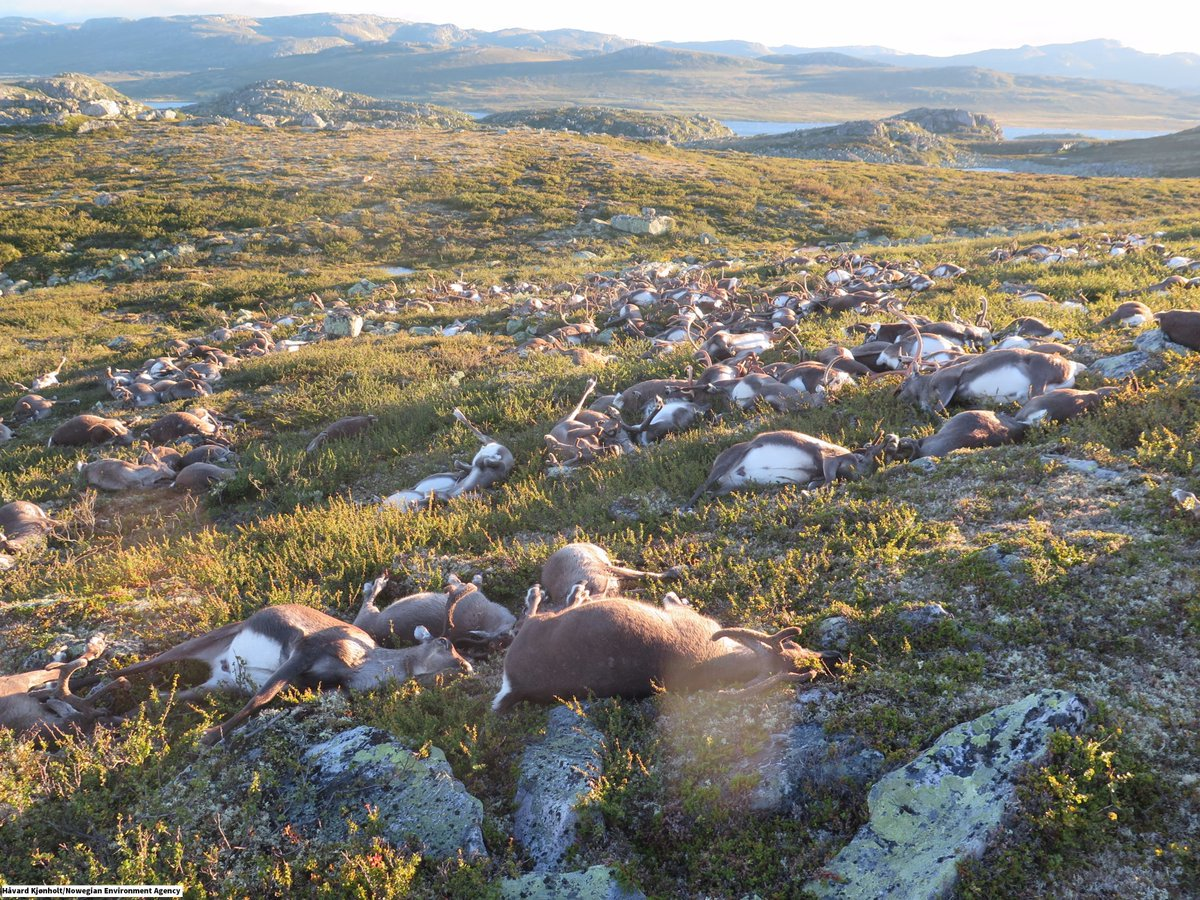 Photos emerge from Norway where a single lightning strike has killed at least 323 reindeer https://t.co/L0I6CAOQbo https://t.co/Xbmpwper37