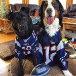 Happy #NationalDogDay from your biggest fans! @Patriots @NFL @espn @BostonDotCom @patriots https://t.co/gR0DoHawJi