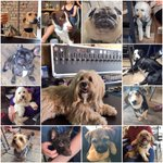 Yappy #NationalDogDay to all our 4 legged customers 🐶 #dogfriendly #craftbeer #bar #liverpool https://t.co/5b8cYjOevb