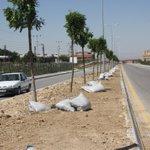 ABB Haymanada giriş yolunu ağaçlandırıyor https://t.co/B3D40Q8ggX @06melihgokcek @asimbalci @Vedat1910 https://t.co/g6zWk3Wuor