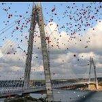 Gözü olanlara kıskananlara direkler hediye olsun 😉 #YavuzSultanSelimKöprüsü #3KöprüCinayettir https://t.co/OxMRU1gN6S
