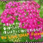 花言葉…戦い まだ終わってない やれることをやる(๑•̀ㅁ•́ฅ✧ #SMAP #世界に一つだけの花 #SMAP25周年に300万枚の花束を #SMAPrightsMatter #WestandforSMAP https://t.co/ycG24oS5bx