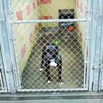 New partner proposed for #PaloAlto animal shelter: https://t.co/IVvPrsPrpL https://t.co/o2fT92KRDg