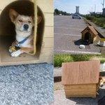 【ほっ】犬小屋と一緒に捨てられた「家付き捨て犬」のその後 https://t.co/DmKMzjn3am ボランティアに引き取られ、現在は落ち着きを取り戻しているという。「アカツキ」という仮名がつけられ、里親募集を開始している。 https://t.co/CzVmj8kJ1l