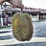 RT jika kau suka makan durian dan boleh makan durian. 😍 https://t.co/0Rmf8Jiisx
