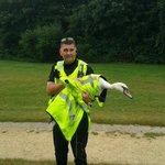 One swan safely removed from the parkway in Peterborough. 350752 https://t.co/12aeCA66pC
