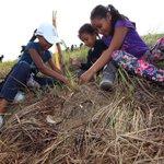 La Alianza por el Millón de Hectáreas es una respuesta a la  disminución de la cobertura boscosa en el país. https://t.co/59LDWapwz4