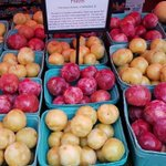 Have you tried a pluot before? 2/3 plum 1/3 apricot... 100% delicious!! #bcfruits @CityMarket104 https://t.co/TskCLArtAO