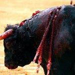 Tortura, ni arte ni cultura. #NoALaTauromaquia https://t.co/9YbimGiXdy