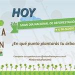 Al plantar tu árbol no olvides compartirnos tus fotos. Queremos formar parte de ese momento #ReforestaPanamá https://t.co/5AAkEs6NZ7