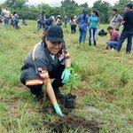 RT SUME911: #MásImágenes del Gran Día Nacional de #ReforestaPanamá en Tanara de Chepo. gilfabrega prensamingob jav… https://t.co/2wMfaWScB4